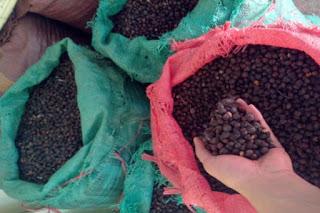 Năm 2016 – Liệu ngành cà phê có vui trở lại ?