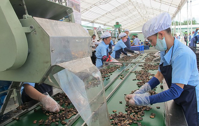 Cashew nuts Vietnam: Need a locomotive!