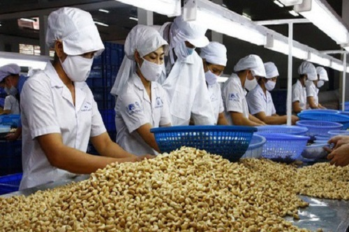 Cashew nut exports increased by more than 13% in the first quarter of 2021